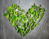 Heart shape of mixed fresh green culinary herbs Stock Photos