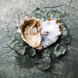 Heart shape Oyster with ice stock photos