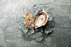 Heart shape Oyster Stock Images