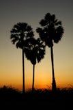 Heart shape palm tree Stock Images