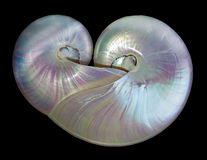 Heart shape pearl shells of a nautilus. Stock Photos