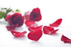 Heart shape petal Royalty Free Stock Photos