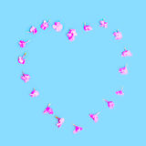 Heart shape of petals flowers over colorful blue Stock Images