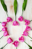 Heart shape of pink tulips on wooden background Stock Photography