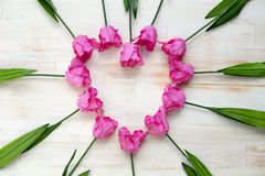 Heart shape of pink tulips on wooden background Royalty Free Stock Image