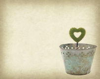 Heart shape plant glow in metal garden pot  on grunge textured Stock Image