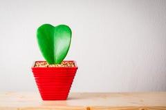 Heart shape plant Royalty Free Stock Photo