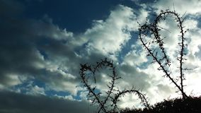 Heart shape of plants and clouds. Video stock video footage