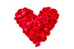 Heart shape from red rose petals. On white background stock images