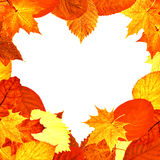 Heart shape red and yellow leaves frame Stock Photography