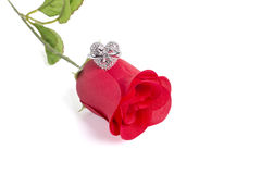 Heart Shape Ring On A Red Rose Royalty Free Stock Photos