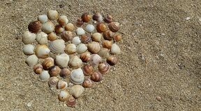 Heart Shape Sea Shells on Brown Beach Sand royalty free stock images