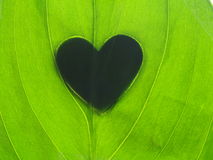 Heart shape shadow on green leaf Stock Photo
