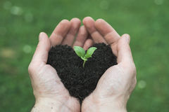 Heart shape soil. Man's hands ho0lds heart shape soil with bud Stock Photography