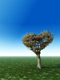 Heart Shape Tree Royalty Free Stock Image