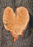 Heart shape in a Tree Stock Image