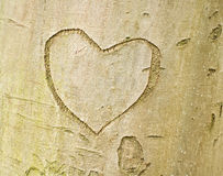 Heart shape on tree bark Stock Photo