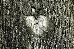 Heart shape in a tree bark royalty free stock images