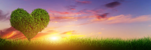 Heart shape tree on grass at sunset. Love, panorama Royalty Free Stock Image