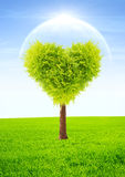 Heart shape tree Royalty Free Stock Photos
