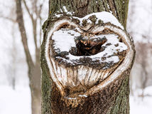 Heart shape on tree.Heart on snow tree Stock Photography