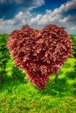 Heart shape tree Royalty Free Stock Images