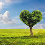 Heart shape tree over blue skies Stock Images