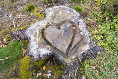 Heart shape in tree stump Stock Image