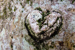 Heart shape in a tree-trunk. Close-up Royalty Free Stock Images