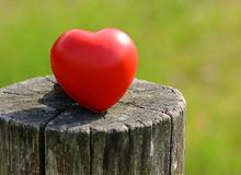 Heart shape on a tree trunk. Red heart shape on a tree trunk Stock Photography