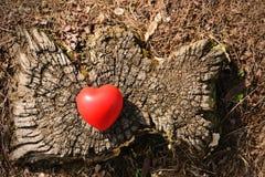 Heart shape on a tree trunk Royalty Free Stock Photos