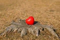 Heart shape on a tree trunk Stock Photo