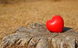 Heart shape on a tree trunk. Red heart shape on a tree trunk Stock Photos