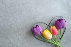 Heart shape tulips royalty free stock image