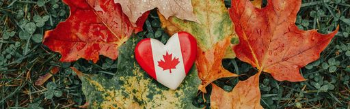 Heart shape wooden national Canadian flag symbol lying on ground in autumn fall red yellow orange maple leaves
