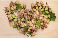 Heart shaped acorns Royalty Free Stock Photos