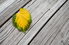 Heart Shaped Autumnal Leaf Stock Images