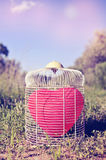 Heart-shaped balloon in a birdcage in the field, with a retro fi Stock Photography