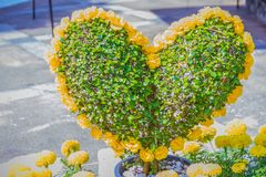 Heart-shaped bonsai with yellow flowers decorated in the garden. Royalty Free Stock Photo