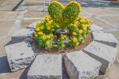 Heart-shaped bonsai with yellow flowers decorated in the garden. Royalty Free Stock Image