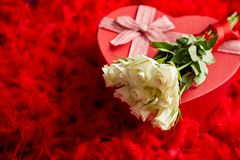 Heart shaped boxed gift, placed on red feathers background stock photography