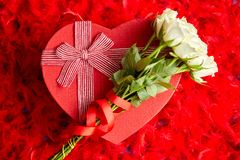 Heart shaped boxed gift, placed on red feathers background royalty free stock images