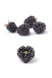Heart shaped bramble. Berry. Isolated Royalty Free Stock Photo