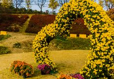 Heart shaped bush covered with yellow daisies Royalty Free Stock Images
