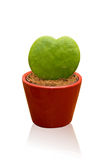 Heart shaped cactus Stock Photography