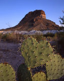 Heart Shaped Cactus & Castelon Peak. A heart shaped cactus with Castelon Peak in the background located in Texas's Big Bend National Park stock image