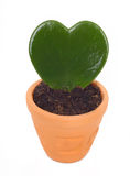 Heart shaped cactus Royalty Free Stock Photo