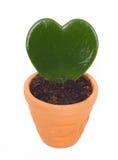 Heart shaped cactus Royalty Free Stock Photo