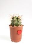 Heart-shaped cactus isolated on white background Royalty Free Stock Photos