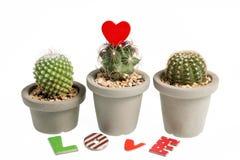 Heart-shaped cactus isolated on white background Stock Image